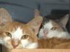 urania_and_danger_cat
