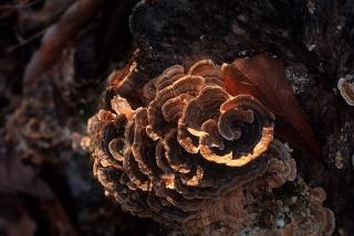 spiral_fungus-2