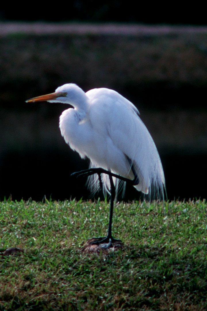 egret-3-720x1080