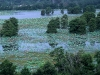 1351-sheldon_lake_from_observation_tower