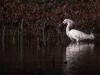 egret-4-1280x853