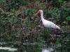 ibis-1-1280x853
