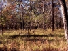 open_woodland-brazos_bend_state_park-011