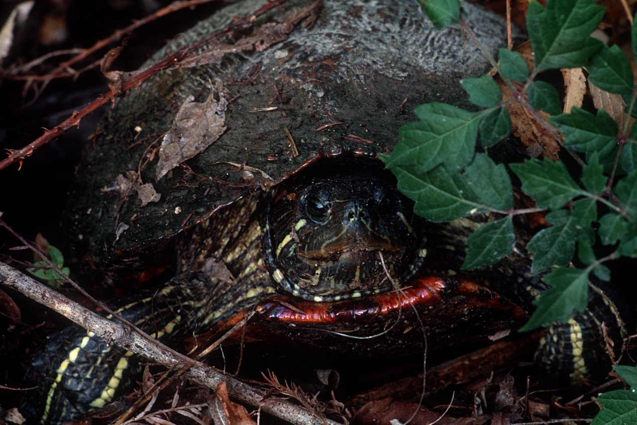 turtle-1-1280x853